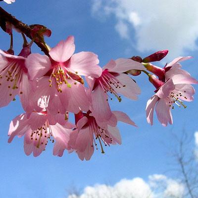 Alles für einen schönen Frühling