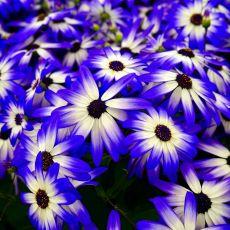 Es gibt fast niemanden, der sich nicht über einen schönen Blumenstrauß freuen würde.