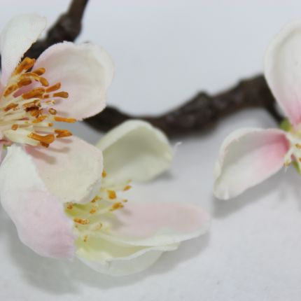 Apfelblüte Style & Accessoires in Dinkelscherben, Mühlenweg 3
