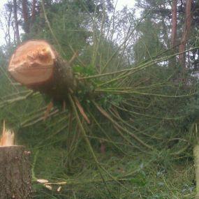 Bild von Baumpflege Strohmeyer