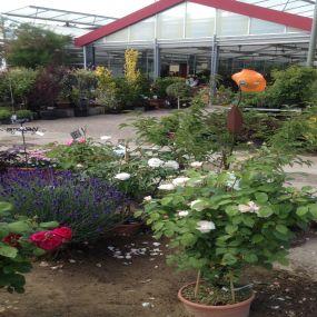 Bild von Hinrichs Pflanzenhandel Ostseebaumschulen