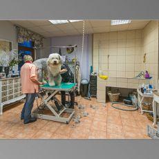 Bild/Logo von By Aramis Dog & Cat - Hundepflege, Katzenpflege in Apolda